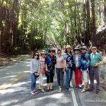 Bohol tour packages bohol touristas philippines 073