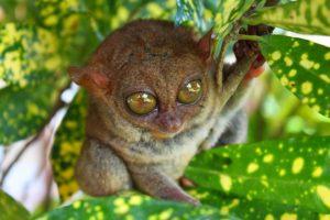 Philippine tarsier and wildlife sanctuary 2