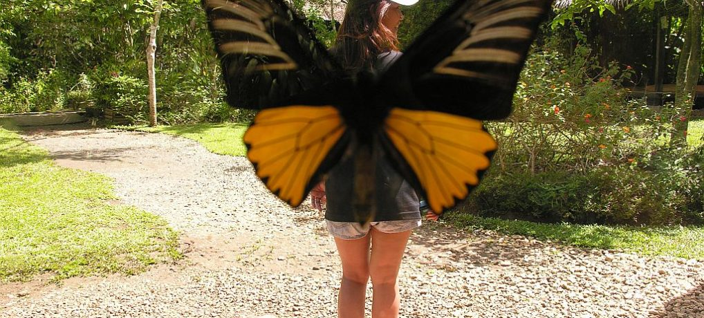 Tour to the Bohol Butterfly Sanctuary