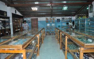 Nova sea shell museum bohol